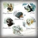 Choisissez la race de votre chien